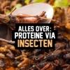 Proteïne via insecten. Durf jij het aan?